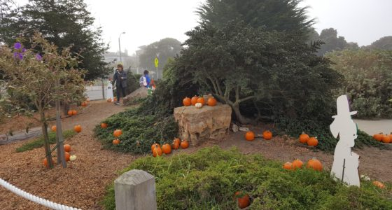 ANNUAL SLOAT PUMPKIN PATCH!